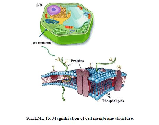 Chemical-Sciences-magnification