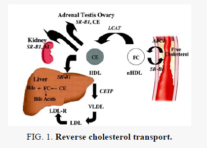 biochemistry-cholesterol