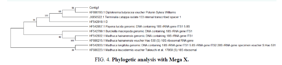 biosciences-phylogetic