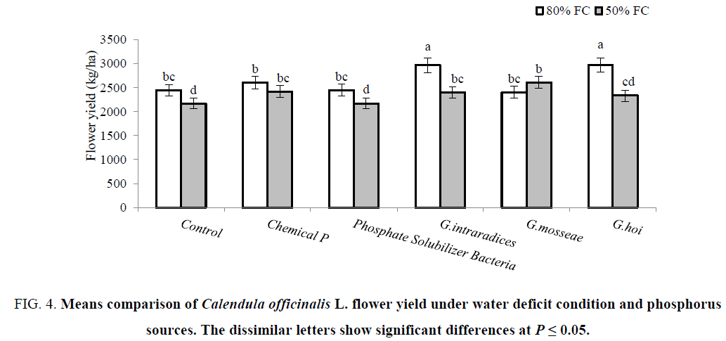 biotechnology-flower-deficit-phosphorus