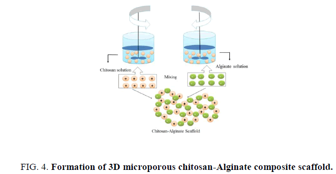 biotechnology-microporous-chitosan-Alginate