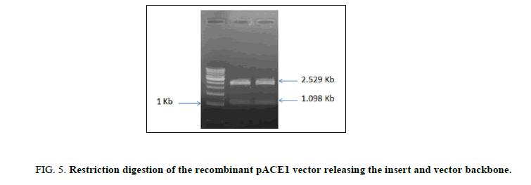 biotechnology-recombinant