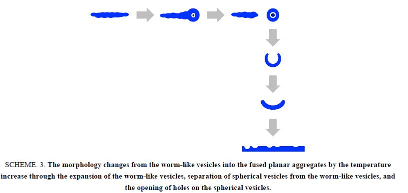 chemxpress-worm-like-vesicles-fused-planar-aggregates