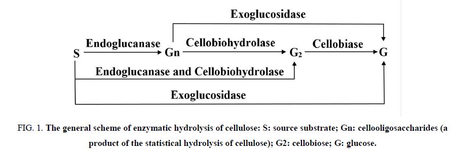 environmental-science-enzymatic