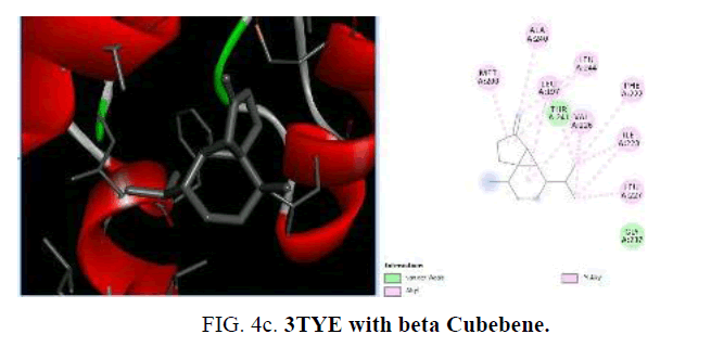 international-journal-chemical-sciences-TYE-Cubebene
