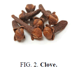 nano-science-nano-technology-Clove